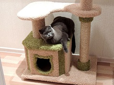 Как обустроить в доме уголок для кошки: способы и возможности